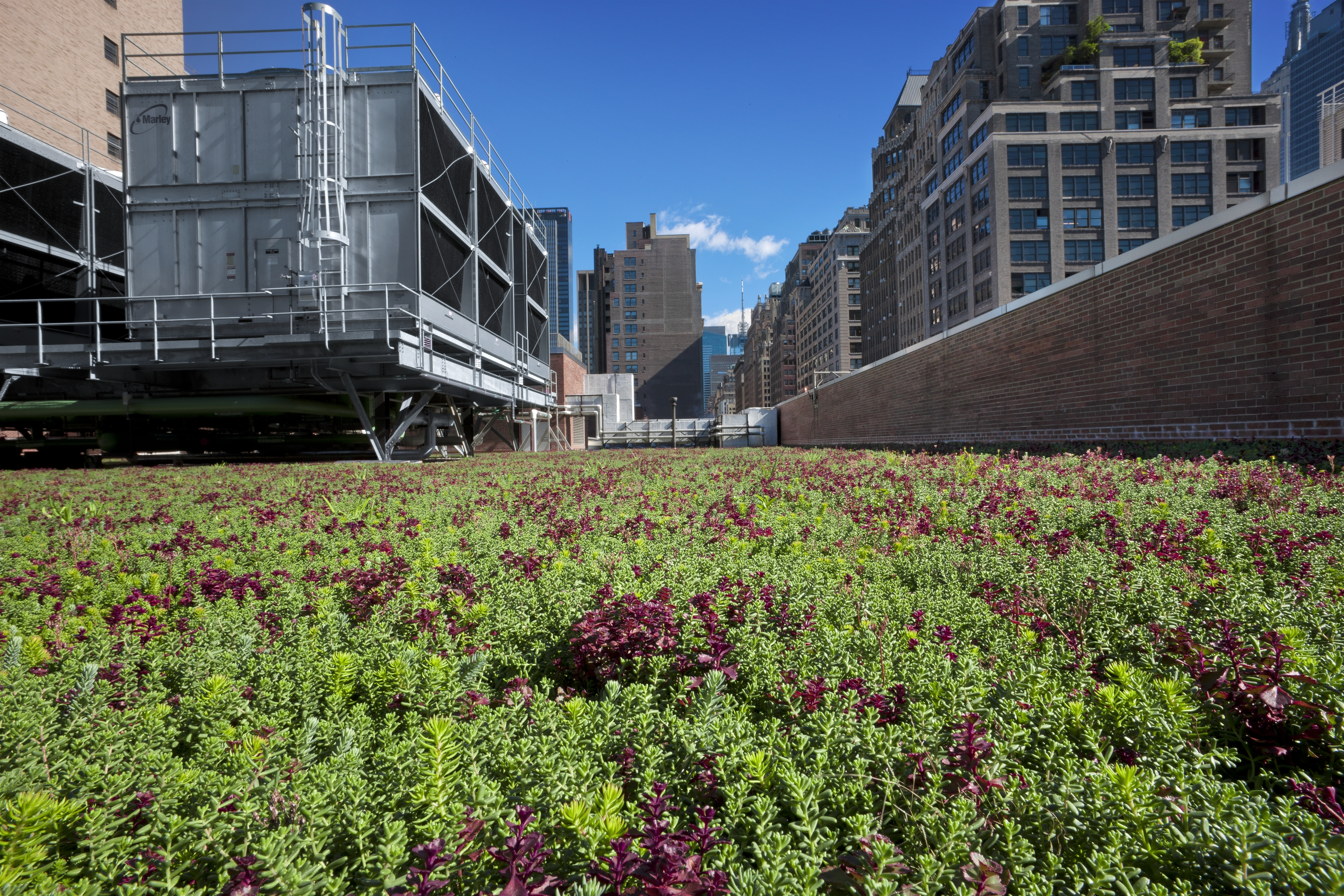 Awesome The New York State Tax Credit For Green Roofs Has Increased By More Than 16%