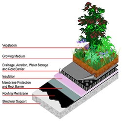 Extensive Systems Green Roof Diagram